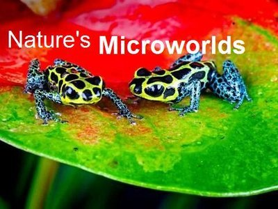 Nature's Microworlds (UK)