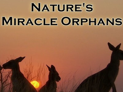 Nature's Miracle Orphans (UK)