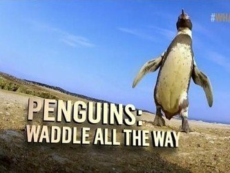 Penguins: Waddle All the Way tv show photo