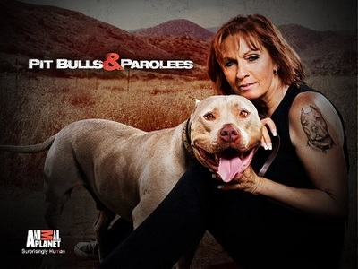 Pit Bulls and Parolees tv show photo