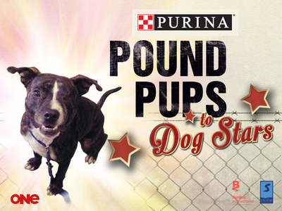Pound Pups to Dog Stars (NZ)