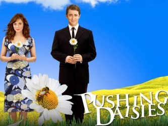 Pushing Daisies tv show photo
