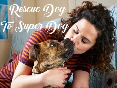 Rescue Dog To Super Dog (UK)