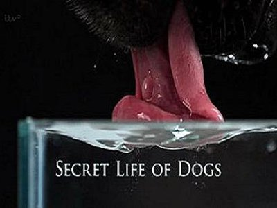 Secret Life of Dogs (UK) tv show photo