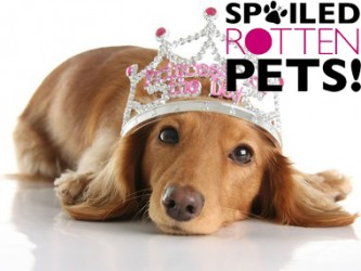 Spoiled Rotten Pets