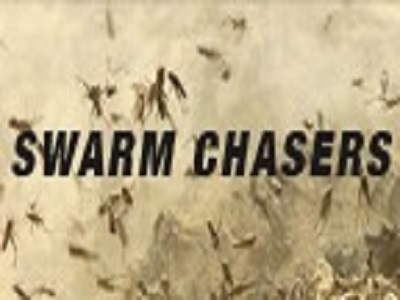 Swarm Chasers