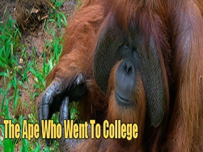 The Ape Who Went to College (UK)