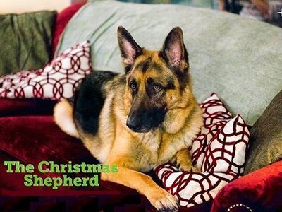 The Christmas Shepherd  tv show photo