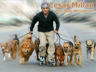 The Dog Whisperer tv show photo