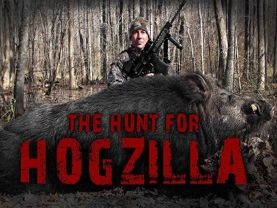 The Hunt for Hogzilla