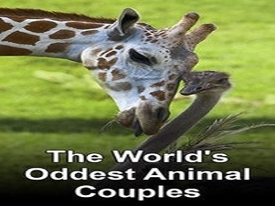 The World's Oddest Animal Couples tv show photo