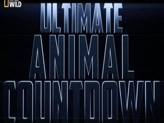 Ultimate Animal Countdown (NZ)