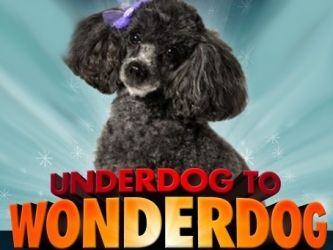 Underdog to Wonderdog tv show photo
