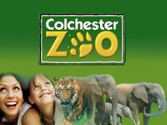 Zoo Days (UK)