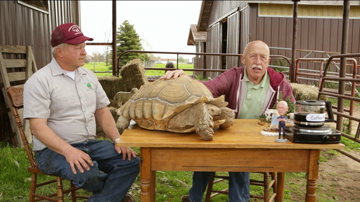 S0E0 Coffee Break: It's Time for Turtles