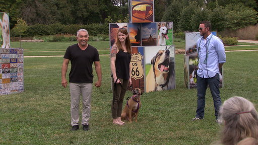 Cesar Millan's Dog Nation S01E04 Meet Me in St. Louis