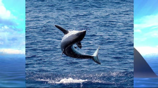 S0E0 'Who Knew' How High a Mako Shark Can Jump? Test Your Shark Smarts
