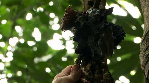 S6E6 Searching for Honey